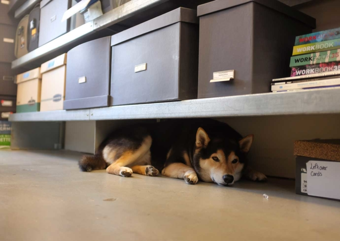 A husky breed dog at rests on the floor under a metal bookshelf with storage boxes and books above.