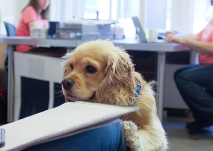 A small beige dog wearing a blue collar with its front paws on a desktop; two figures work at desks in the background.